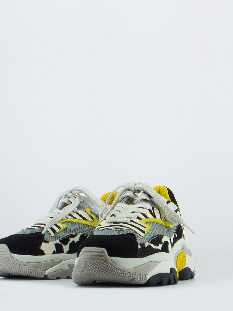 ASH - Sneakers addict zebra / giallo