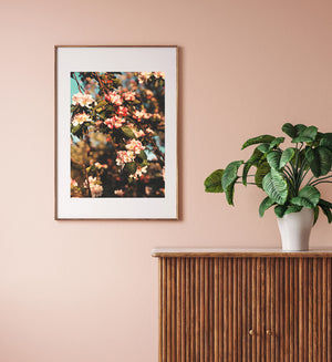 Cherry Blossom Photography Print
