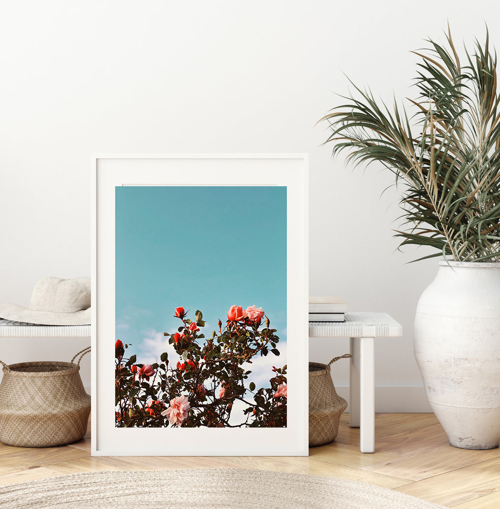 Roses Photography Print