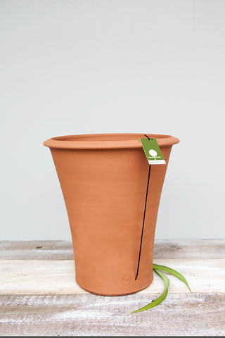 Lilly Pot