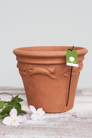 Flower Pot Sprigged