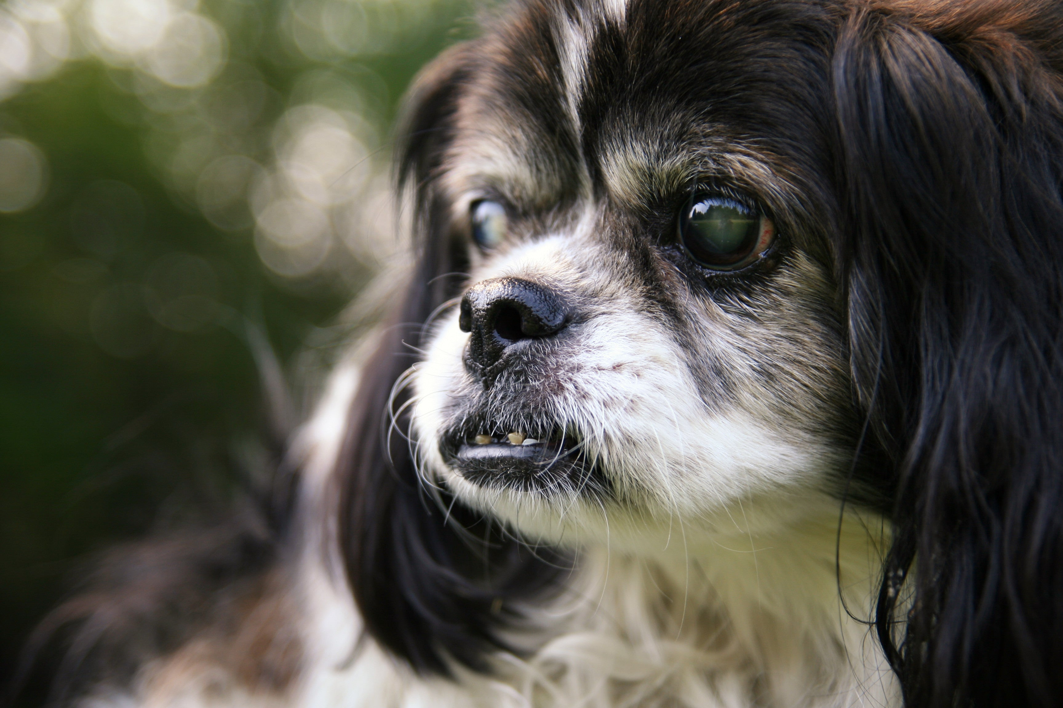 Taking Care of Your Dog\'s Eyes | CleverPet