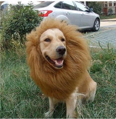 Lion Costume For Dog - TopTier Shop Unique Fun Trending Gifts Hot Items Shopping Pets