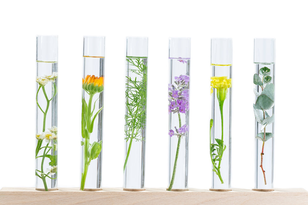 Aromatherapy's Global Popularity as a Complementary Alternative Medicine