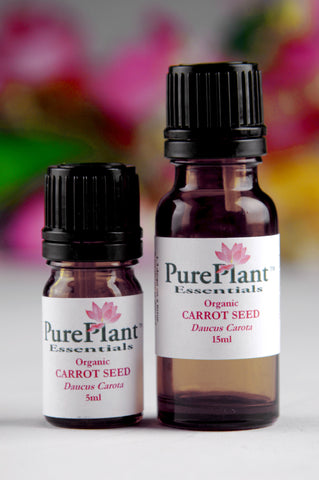 Carrot Seed, Daucas Carota - Hydrodiffused Seed, France-Single Pure Essential Oil-PurePlant Essentials