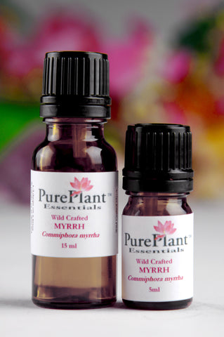Myrrh, Commiphora myrrha -- Steam Distilled Gum Resin Tears (Wild Crafted), Somalia-Single Pure Essential Oil-PurePlant Essentials