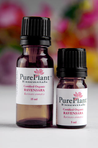 Ravensara Oil, Ravensara aromatica - Organic, Madagascar - SAVE 25% OFF!-Single Pure Essential Oil-PurePlant Essentials