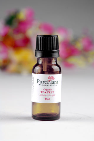 Tea Tree Essential Oil, Melaleuca alternifolia - Australia - SAVE Up to 30% OFF!-Single Pure Essential Oil-PurePlant Essentials