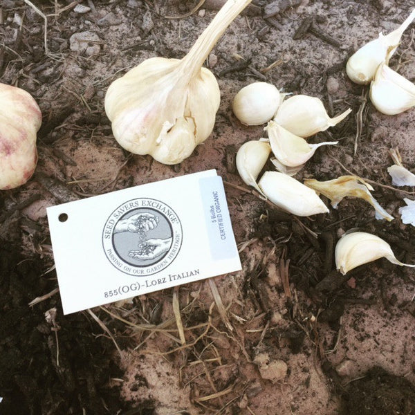 Organic Garlic Going Down!