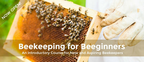Beekeeping for Beeginners LIVE Class September 16th