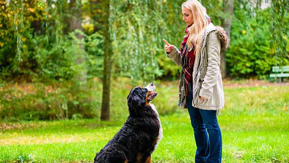 Interview with a Professional Dog Trainer