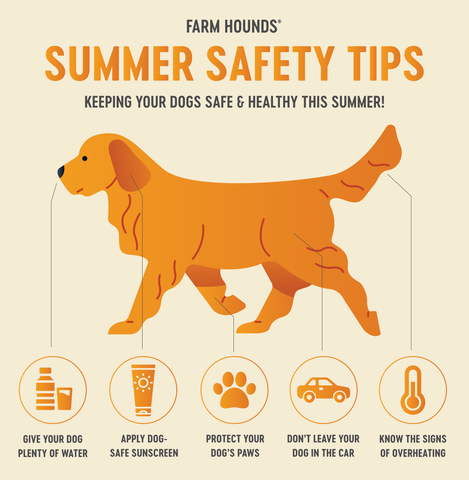 Farm Hounds - Summer Safety Tips for Dogs