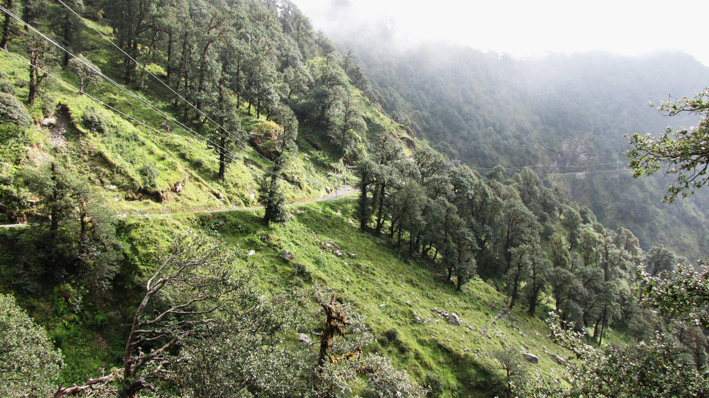 State in India planning to break 24 hour tee planting record... With 50 Million Trees!