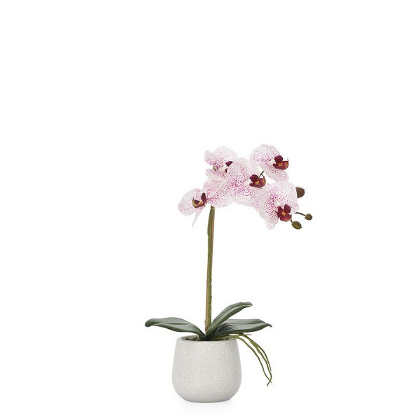 Pink Single Orchid Arrangement in Ceramic Planter