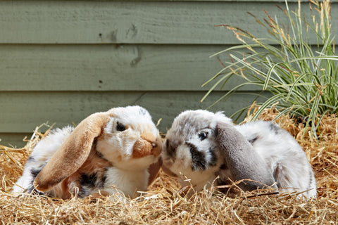 Soft plush Lop eared rabbits in Living Nature brand