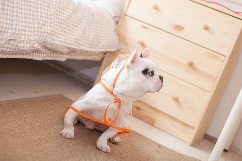 Dog Coat - Transparent Waterproof Dog Raincoat