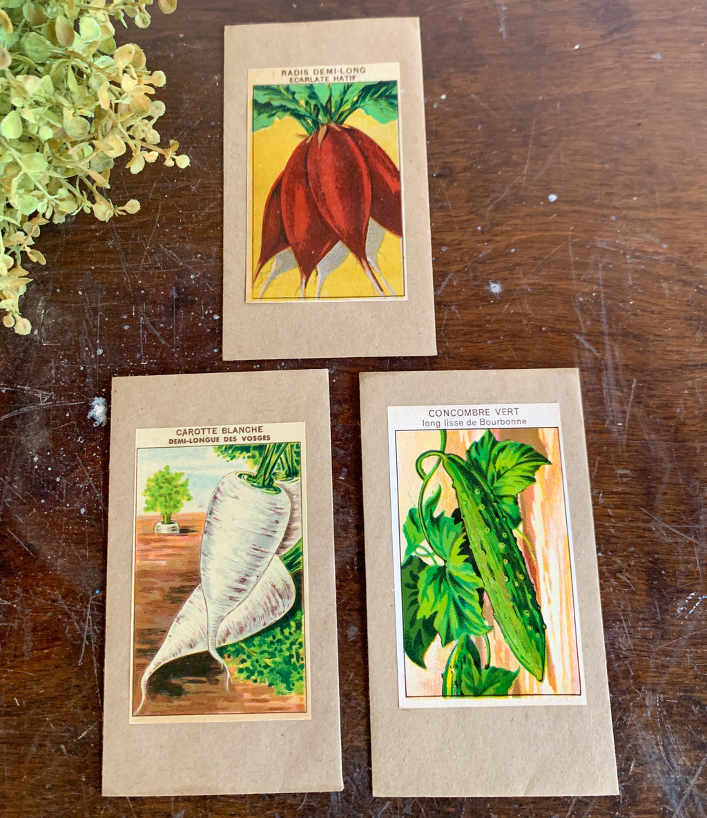 Set of 3 Seed Packet