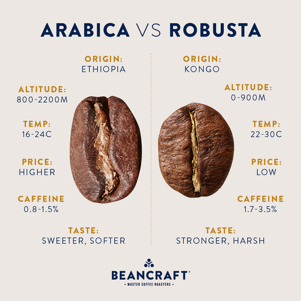 The low-down on Specialty Robusta