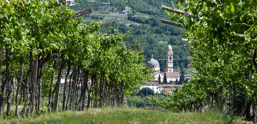 Valpolicella Ripasso and The Valley of the Many Wineries
