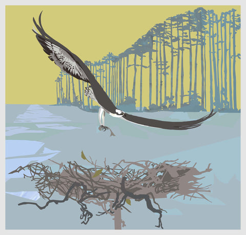 Osprey and Loblolly