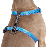 Big & Little Dogs Harness Strap Rawr