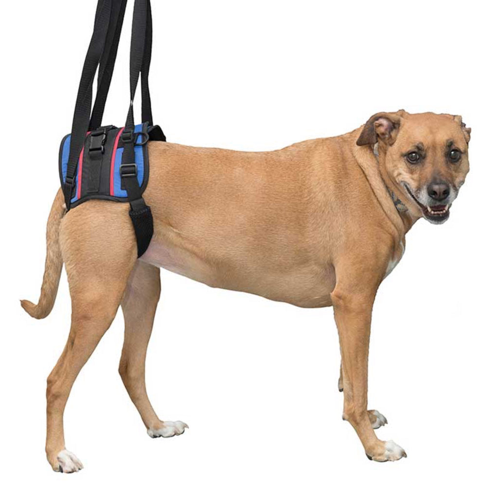 Walkin Pets Walkin Lift Combo Rear Harness