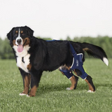 Balto BT Jump Dual Knee Dog Brace