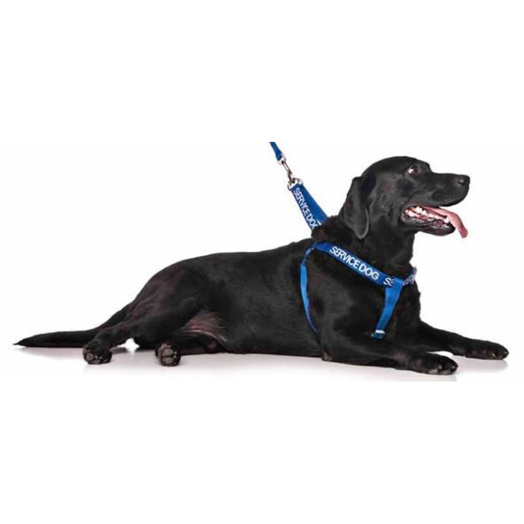 Friendly Dog Collars Service Dog Strap Harness