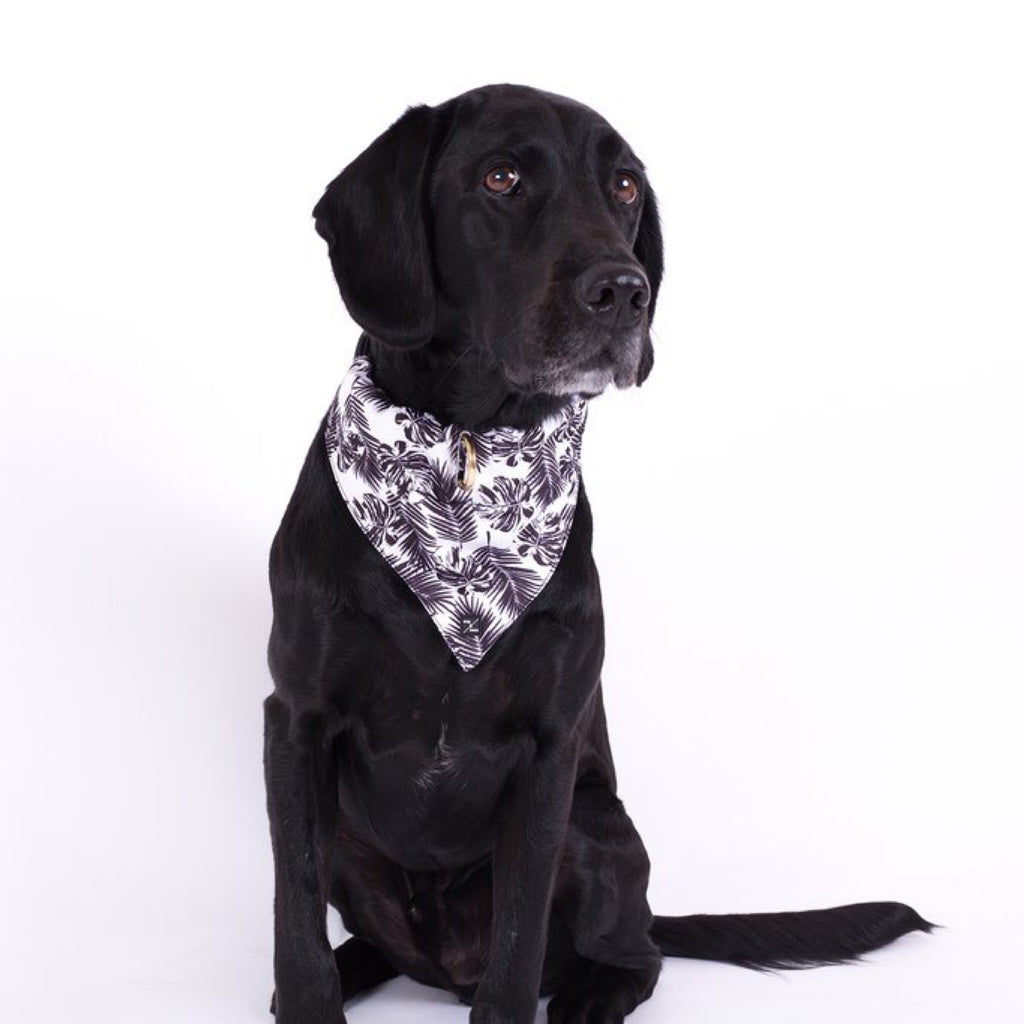 Dog Bandana Tropical Print Black