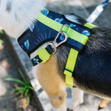 Zee Dog Area 51 Mesh Harness