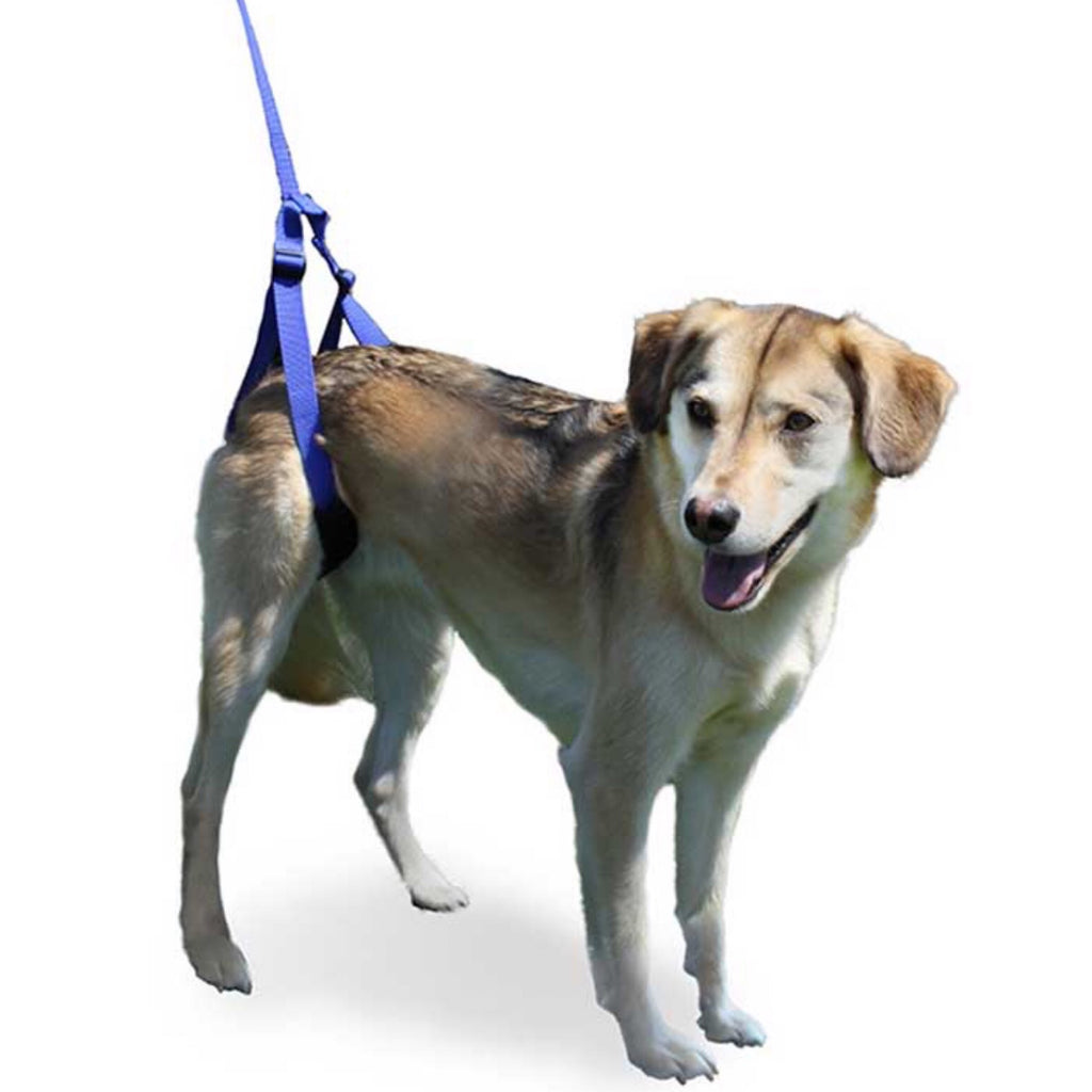 Walkin Pets Up-n-Go Leash