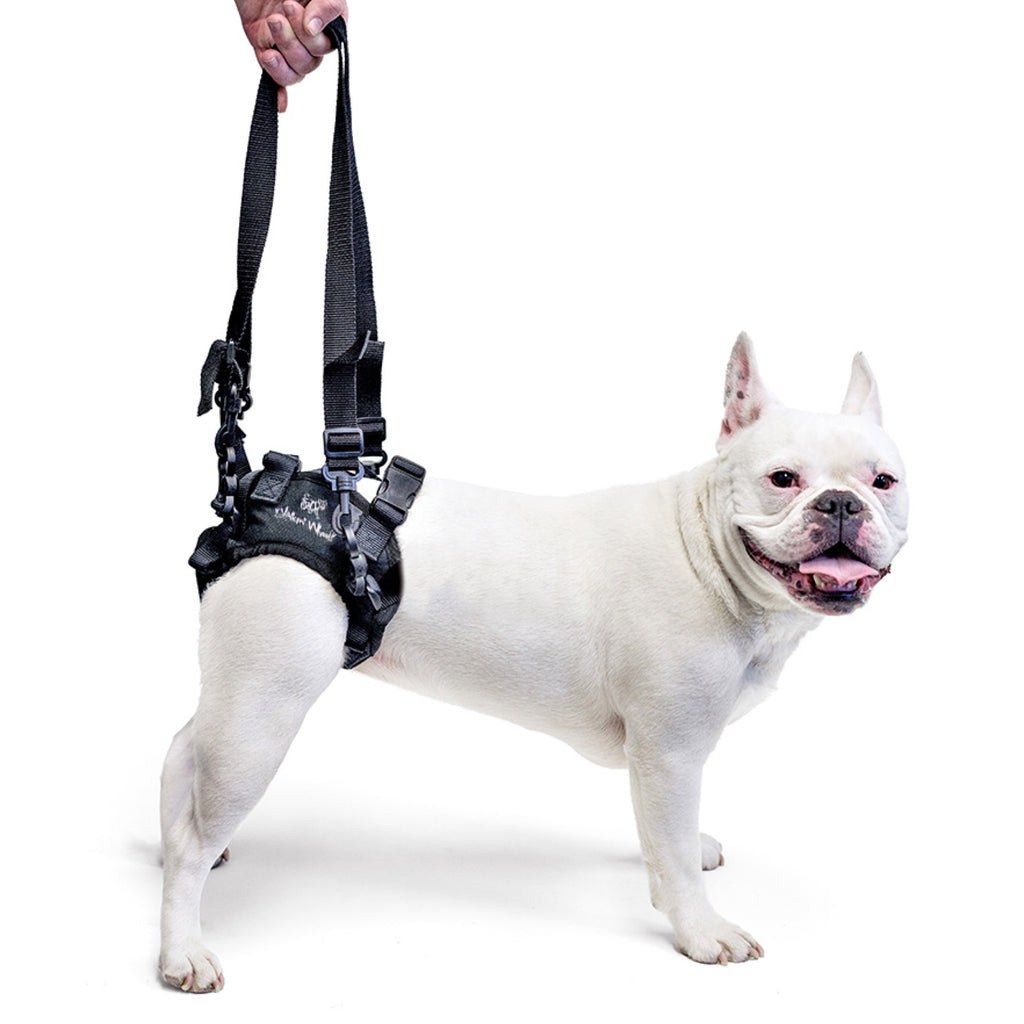 Walkin Pets Lift Rear Harness