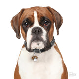 My Family Friends Boxer ID Tag Charm Model 1