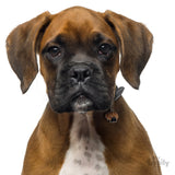 My Family Friends Boxer ID Tag Charm Model 2