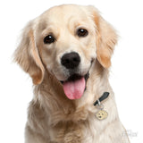 My Family Friends Golden Retriever ID Tag Charm Model