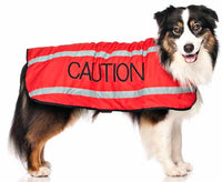 Friendly dog Collars Caution Coat
