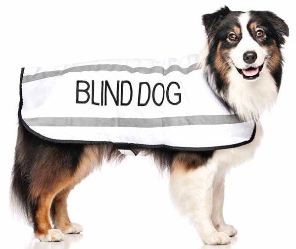 Friendly Dog Collars Coat Blind Dog