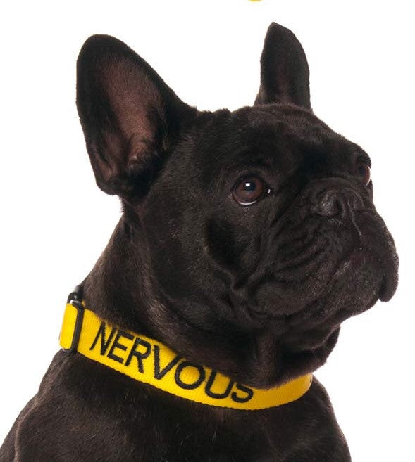 Friendly Dog Collars Nervous Clip Collar