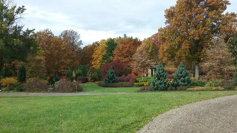 holden arboretum during fall