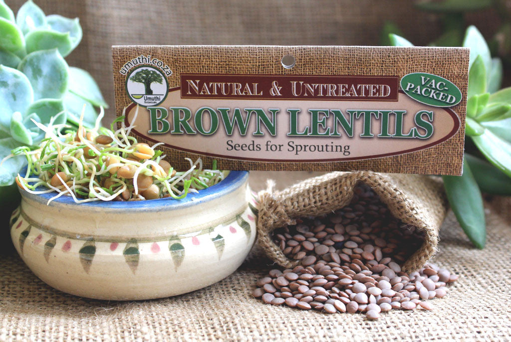 LENTILS, BROWN/BLACK <BR> for Sprouting