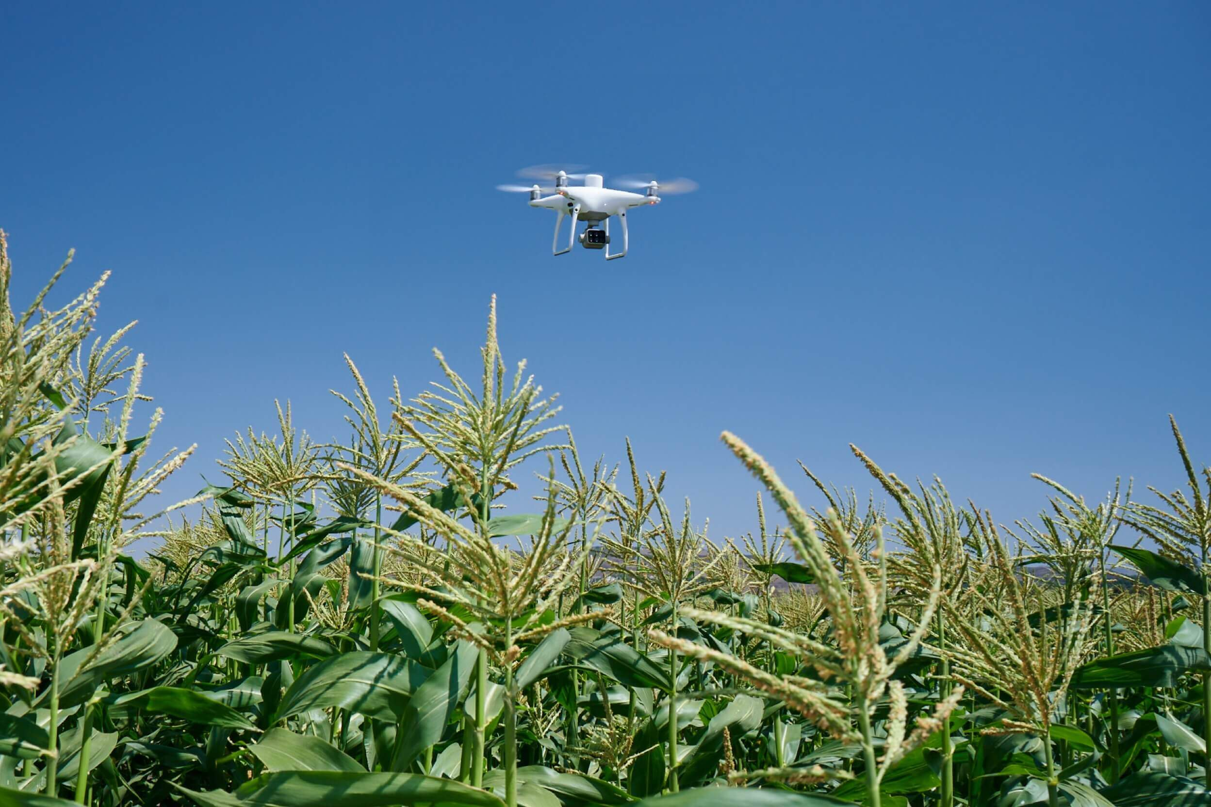 P4 Multispectral Agriculture Drone Crop Management