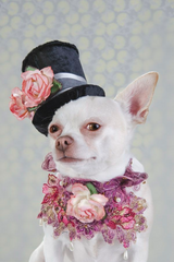 fancy dog clothes