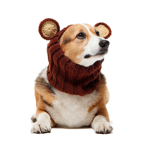 Dog Snood Costume Grizzly Bear Zoo Snood