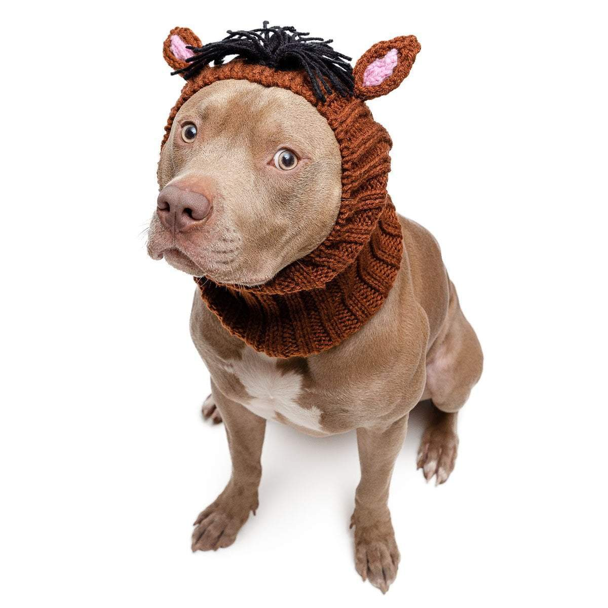 Horse Dog Snood Knit Dog Costume By Zoo Snoods