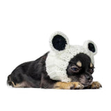 Dog Costume Panda Bear Zoo Snood