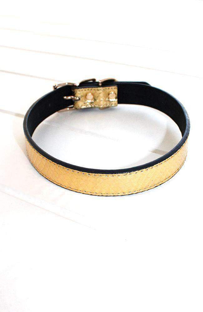 gold crocodile dog collar