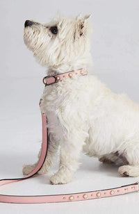 Pink Pearl Studded Vegan Leather Fashion Dog Collar
