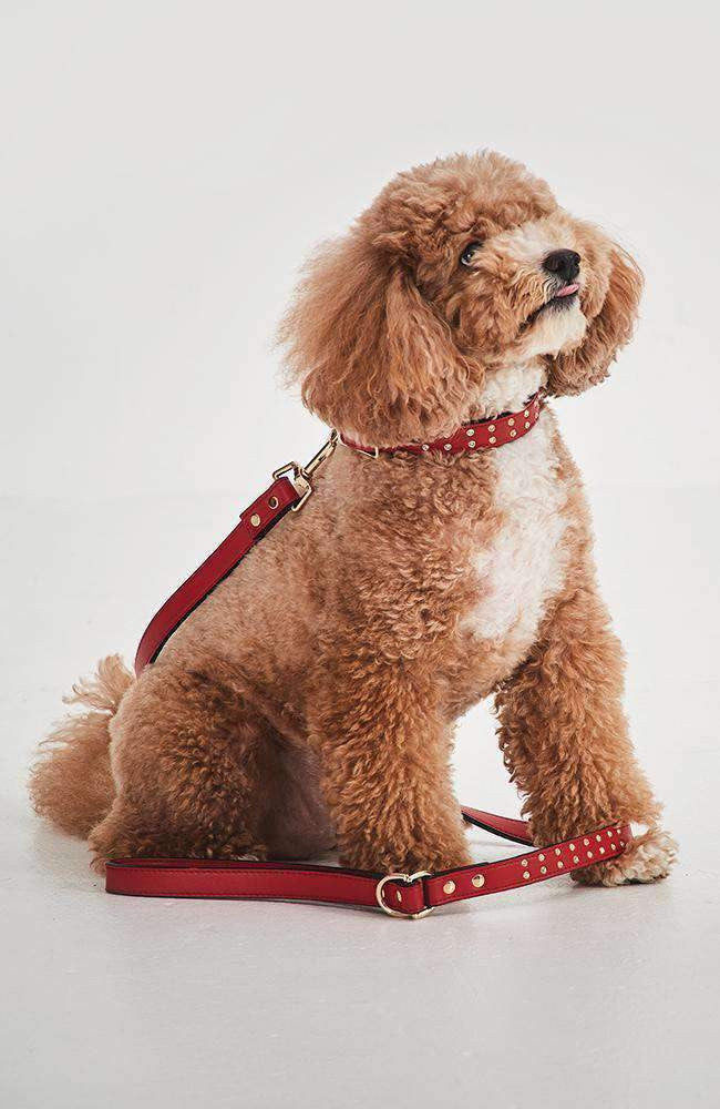 red with diamond studs dog collar