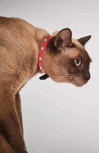 red with diamond studs cat collar