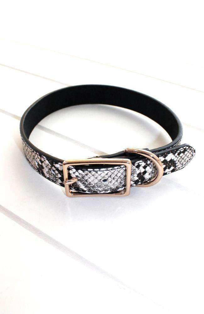 embossed snake vegan leather fashion dog collar